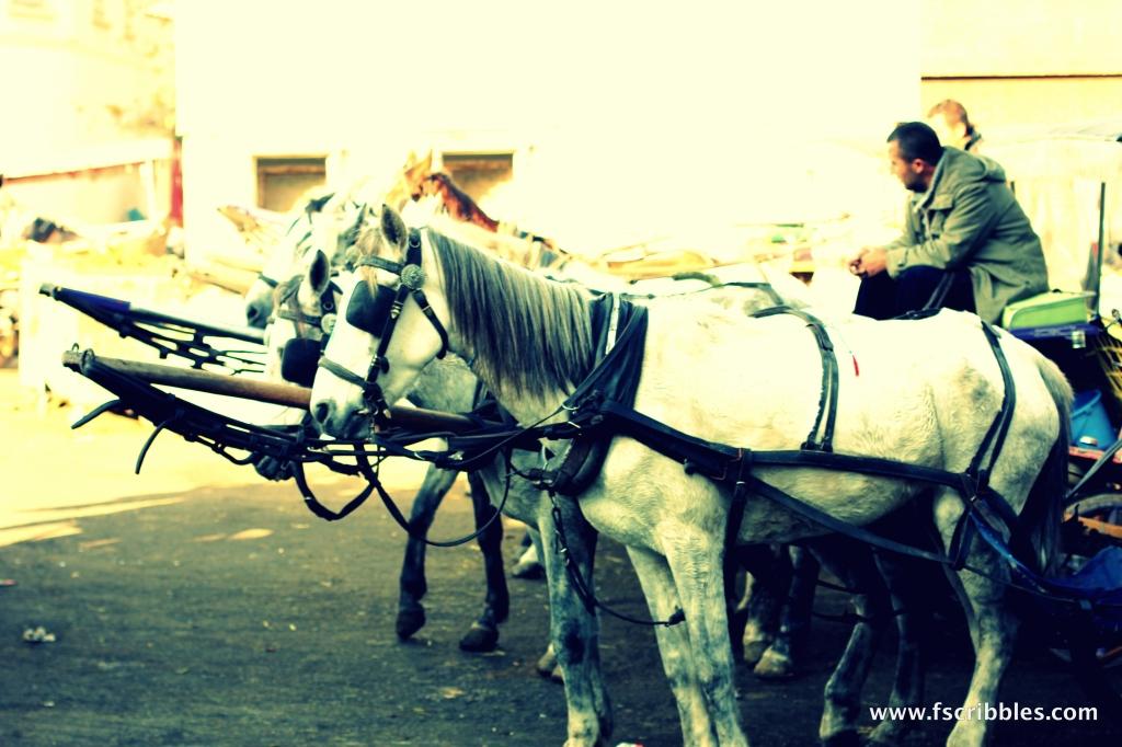 Princes Islands Turkey horses